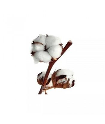 Χύμα Άρωμα Fleur De Cotton απο Beauty hall